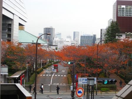 江戸東京博物館 紅葉
