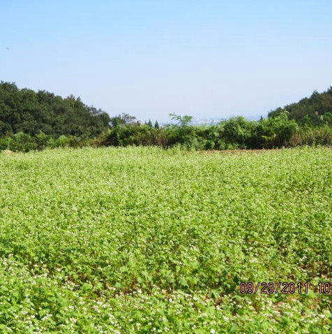 松原のソバ