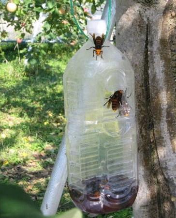 スズメバチの知恵