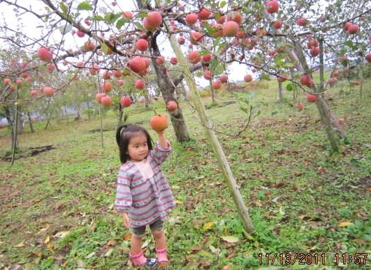 りんご豊作ですね