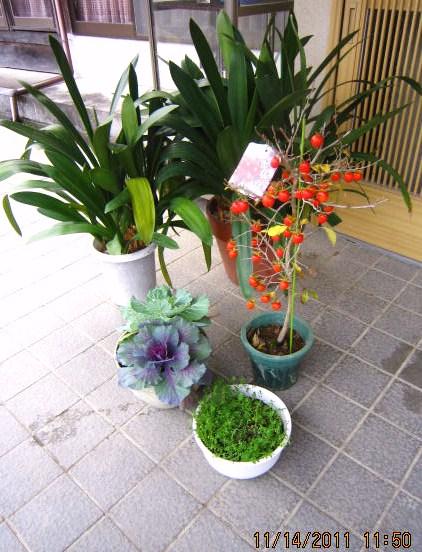 園芸農家の玄関