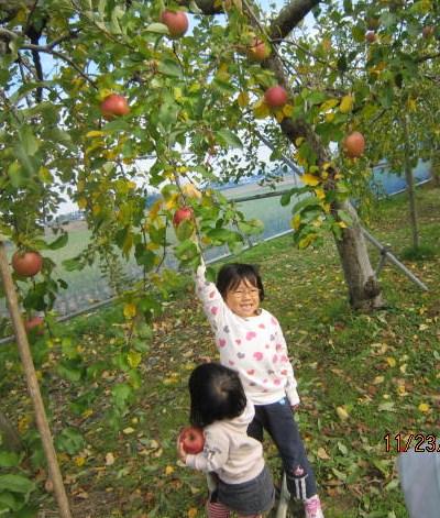 姉妹でりんご摘み