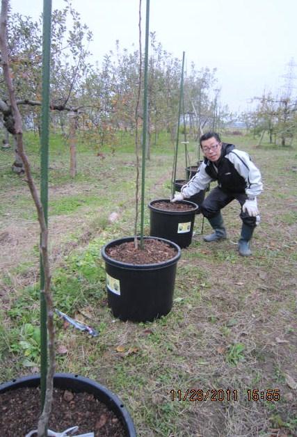 ルレクチュェの鉢植え
