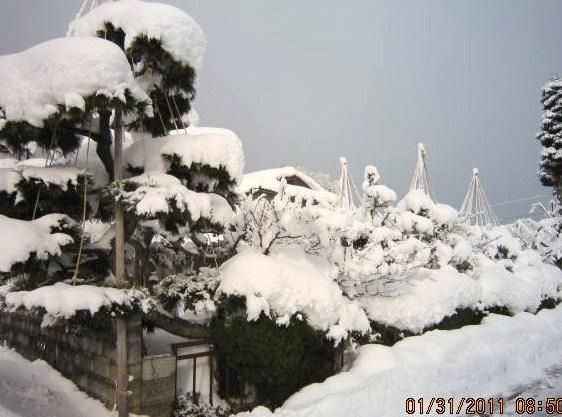 雪に埋まるno・1