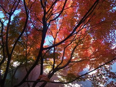syukusyo-RIMG0346.jpg