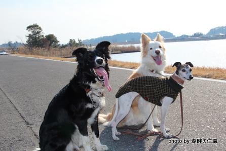 湖畔で3頭