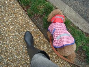 雨上がり散歩隊ー4