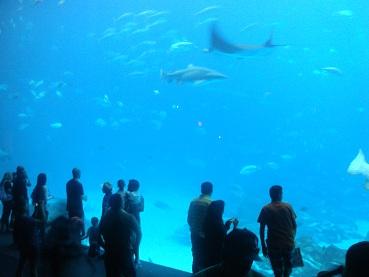 Aquarium-8.jpg