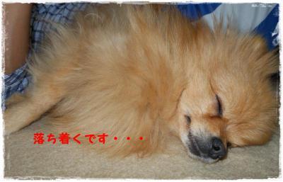 DSCN0826_convert_20120222144913.jpg