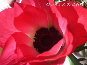 IMGP7825-2.jpg