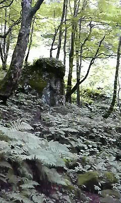 猿岩のような岩