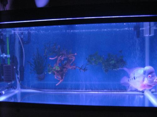 2011,8,3 FH水槽全景