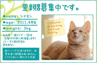 shinamon