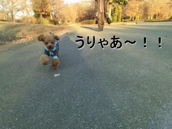 散歩 走り♪
