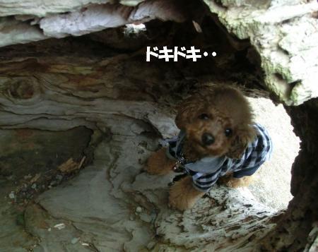 トンネル1_c♪