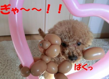 CIMG3540_convert_20120213135833[1]♪