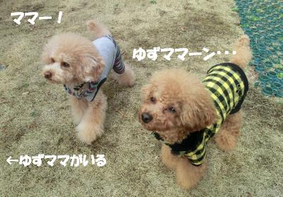 CIMG5850_convert_20120314180619☆