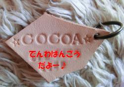 CIMG4542_convert_20120221135624.jpg