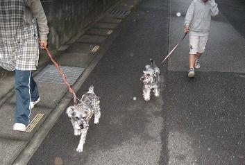 20111015朝の散歩2
