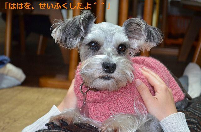 coconon_20120123_091.jpg