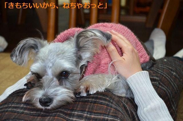 coconon_20120123_092.jpg