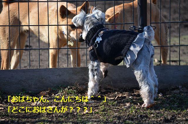 coconon_20120126_141.jpg