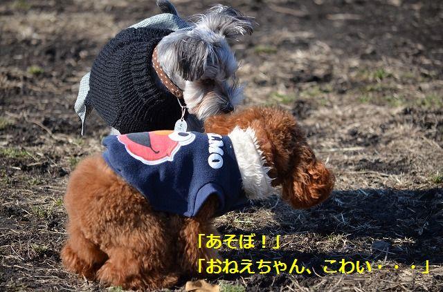 coconon_20120126_159.jpg