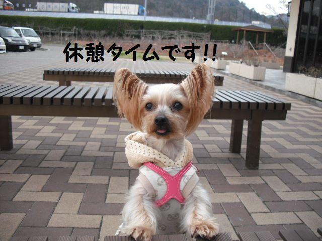 福山SA(上り)にドッグランなかったっ