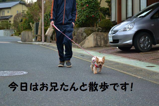 お兄たんと散歩♪