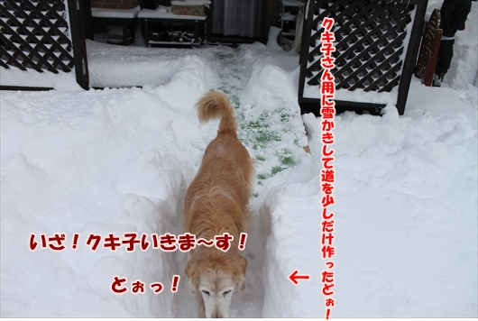 IMG_3775_R.jpg