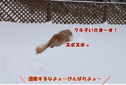 IMG_3778_R.jpg