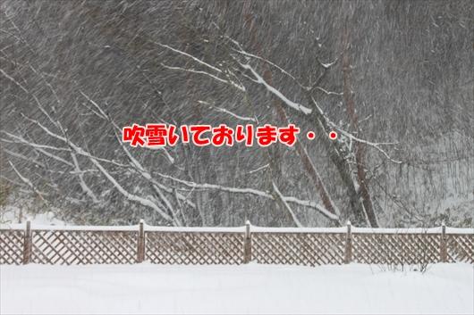 IMG_3807_R.jpg