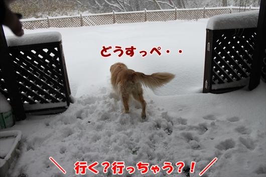 IMG_3809_R.jpg