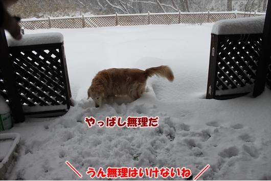 IMG_3810_R.jpg