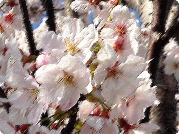 写真-12-04-12-15-34-23