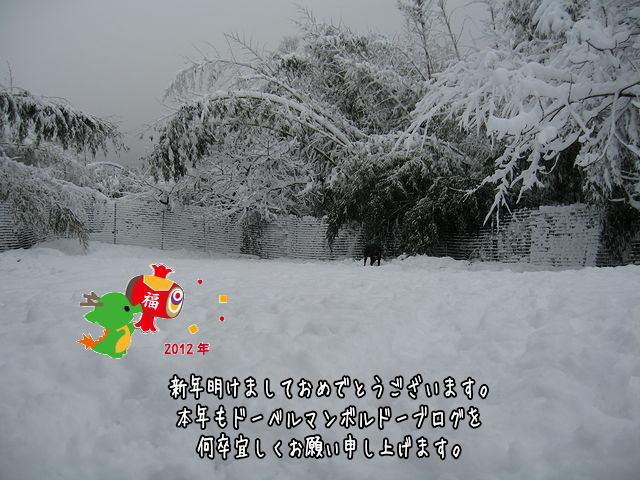 dora2012.jpg