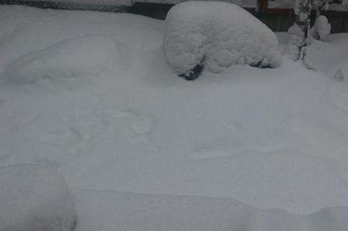 庭に積もる雪ー