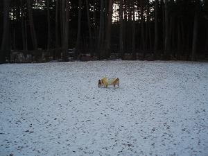 雪見ドッグラン