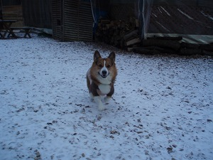 つーくん、雪の中嬉しいね