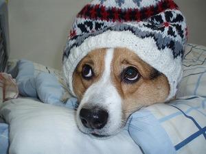 ツバサ冬仕様
