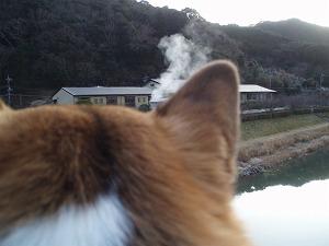 湯煙とツバサ