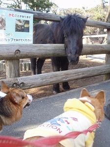 二人ともお馬さんに夢中