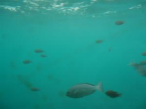 沖合いの海の中