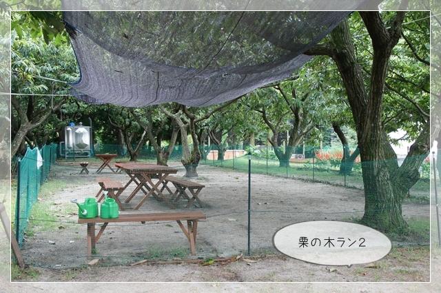 マロンの樹06