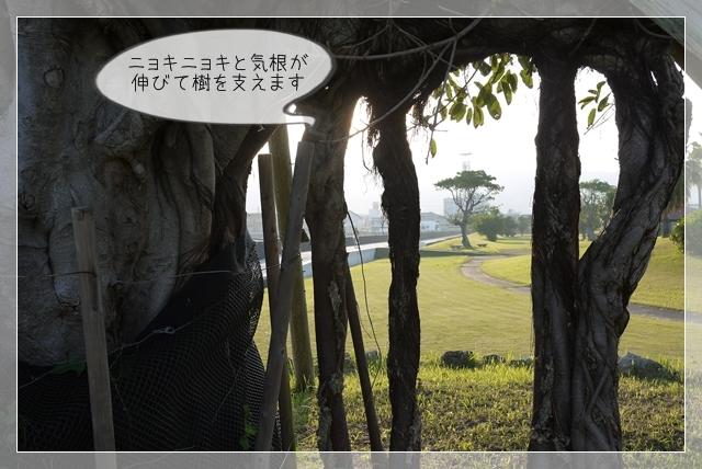 ミニ散歩10