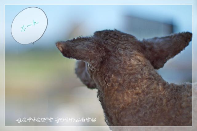 モデル犬06