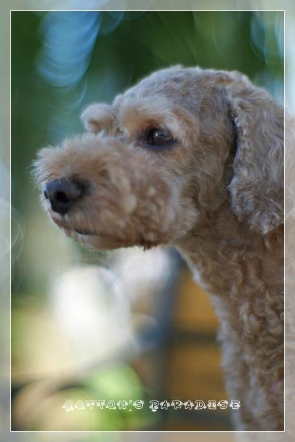 モデル犬04