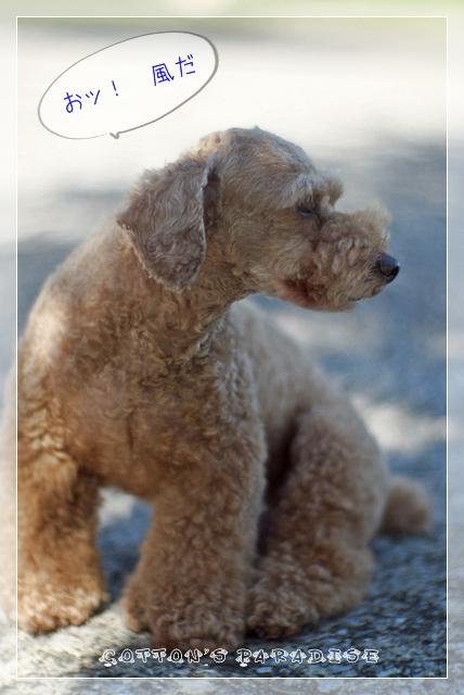 モデル犬05