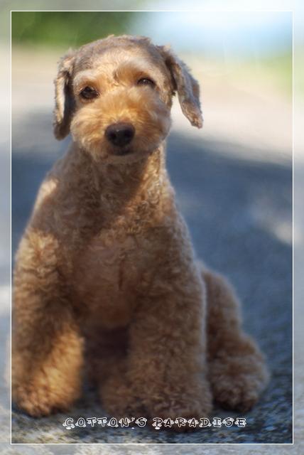 モデル犬01