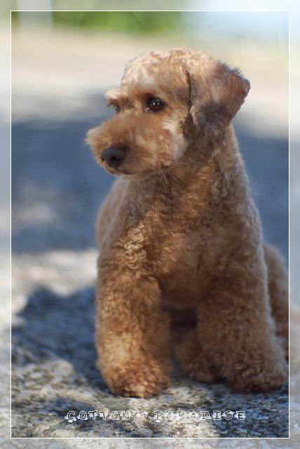 モデル犬02